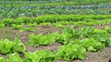 """许多蔬菜都经过有害化学物质的处理,在您""""健康""""饮食之前,先确保自己知道蔬菜的出处。"""
