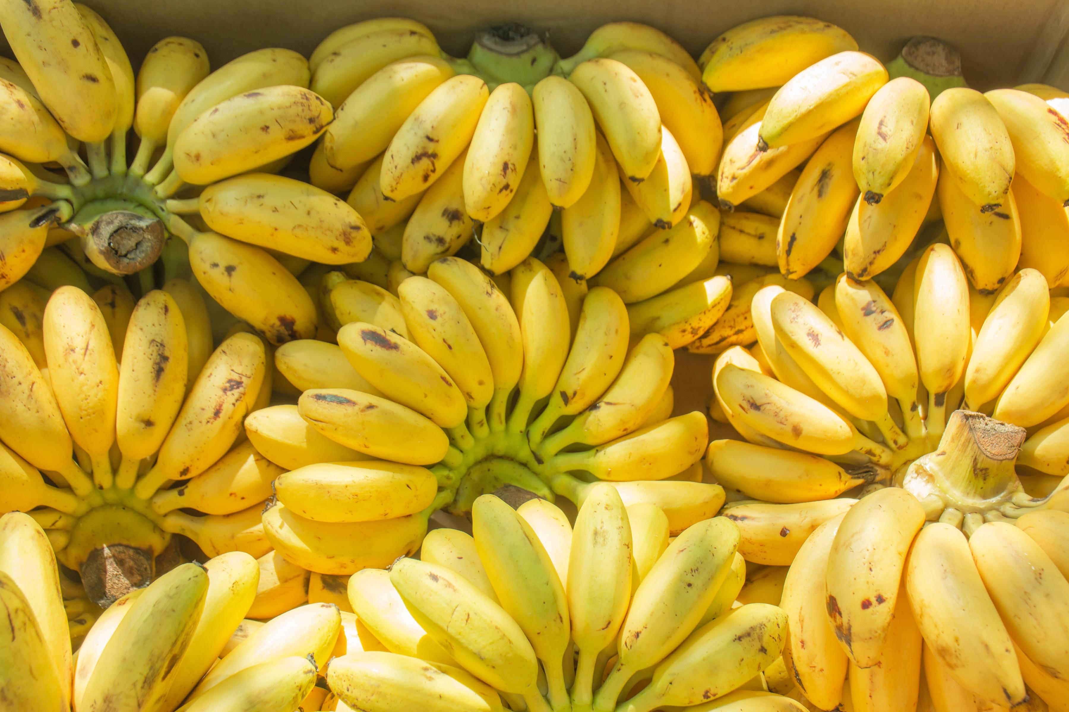 bananas for bananas!