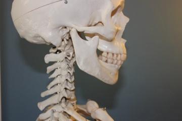 skull-778075_1920-698964-edited